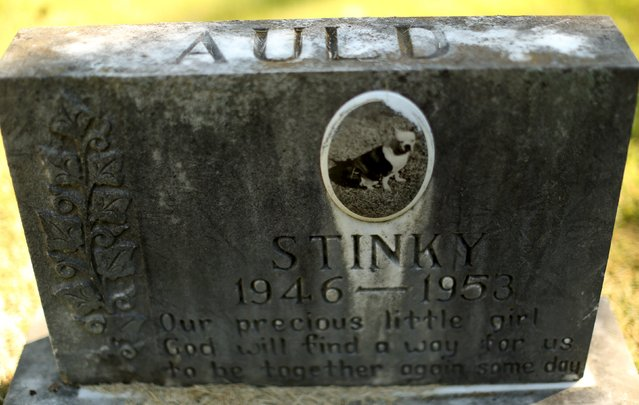 """The headstone and tile photo of """"Stinky"""" is seen at the Aspin Hill Memorial Park in Aspen Hill, Maryland August 25, 2015. (Photo by Gary Cameron/Reuters)"""