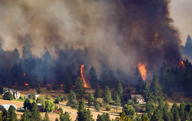 In this Sunday, August 21, 2016 photo, a fast-moving wildfire approaches homes on the north side of Beacon Hill in Spokane, Wash. A series of fires started Sunday afternoon amid high winds and temperatures in the 90s. (Photo by Colin Mulvany/The Spokesman-Review via AP Photo)