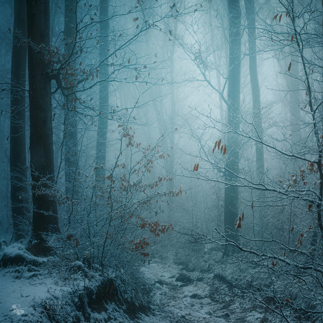Winter Dream. (Ildiko Neer)