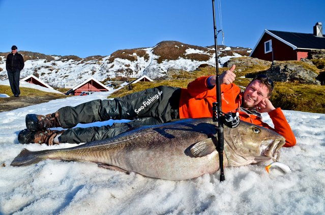 In this photo made available today, German angler Michael Eisele poses with the 103.6 pound cod fish that he caught in near Hammerfest, northern Norway, on April 28, 2013. (Photo by Soroya Havfiskesenter/NTB scanpix)