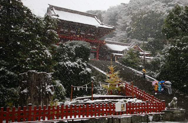 People walk in the snow at the Tsurugaoka Hachimangu Shrine in Kamakura, near Tokyo, Thursday, November 24, 2016. Tokyo residents woke up Thursday to the first November snowfall in more than 50 years. And the Japan Meteorological Agency said it was the first time fallen snow on the ground was observed in November since such records started to be taken in 1875. (Photo by Shizuo Kambayashi/AP Photo)