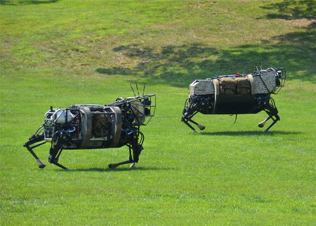 Two four-legged robots, part of DARPA's Legged Squad Support System (LS3) program, run through a field during testing. The semi-autonomous LS3 machines are being designed to help carry heavy loads through rugged terrain, interacting with troops in a similar way to a trained pack animal. (Photo by DARPA)