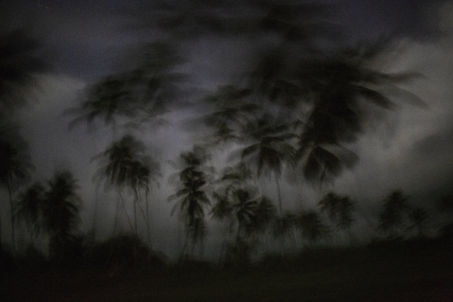 This September 4, 2018 photo shows palm trees as the day begins to break in Irlaya, Honduras. With more than 60 per cent of its 9 million population living in poverty, Honduras is one of the poorest countries in Latin America, and the Mosquitia is one of the most impoverished areas. (Photo by Rodrigo Abd/AP Photo)