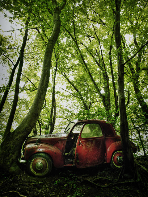 A rusty red car is abandoned in a forest, in 2014, Germany. (Photo by Dieter Klein/Barcroft Media)