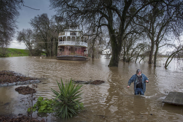 Rick Sorenson, owner of the Rio Ramaza Marina, wades in the Sacramento River after securing an old paddlewheel boat on his property as the river makes its way up the levee on Garden Highway in Sacramento, Calif., Monday, January 9, 2017. (Photo by Hector Amezcua/The Sacramento Bee via AP Photo)