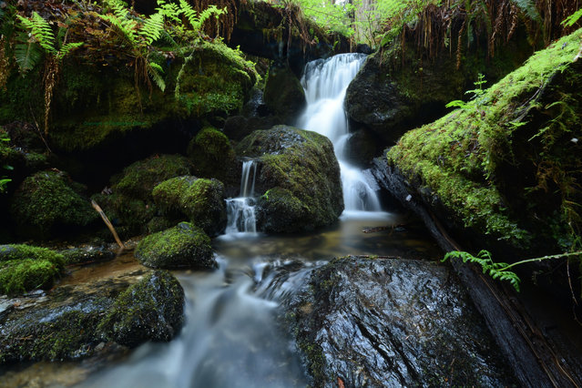 """""""Trillium Falls"""". This was taken at Trillium Falls in Redwood National and State Park in Humboldt County California. Photo location: Redwood National and State Park, Humboldt County, California. (Photo and caption by Christiopher Wolven/National Geographic Photo Contest)"""