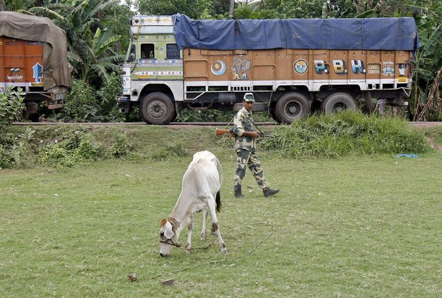 An Indian Border Security Force (BSF) soldier patrols as trucks wait to cross the India-Bangladesh check-post in West Bengal, India, June 20, 2015. Some 30,000 Indian soldiers guarding the border with Bangladesh have a new mandate under Prime Minister Narendra Modi's government this year – stop cattle from crossing illegally into the Muslim-majority neighbour. (Photo by Rupak De Chowdhuri/Reuters)