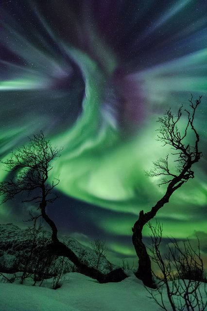 Creature by Ole Christian Salomonsen (Norway). On 30 October a CME (Coronal Mass Ejection) hit Earth, displaying multi-coloured auroras across the sky for most of the night in Kattfjordeidet, Tromsø, Norway. The old birch trees resemble arms reaching for the auroral corona appearing like a strange creature in the sky. (Photo by Ole Christian Salomonsen)