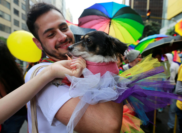 A man and his dog attend an annual gay pride parade in Bogota, Colombia, July 3, 2016. (Photo by John Vizcaino/Reuters)