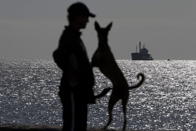 A local resident and a dog are silhouetted as a crippled freighter, left, carrying hundreds of refugees trying to migrate to Europe is towed by a Greek navy frigate at the coastal Cretan port of Ierapetra, Greece, on Thursday, November 27, 2014. A smuggling ship carrying more than 700 men, women and children that broke down in gale-force winds while trying to reach Europe was towed Thursday to the Greek island of Crete. (Photo by Petros Giannakouris/AP Photo)