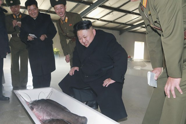 North Korean leader Kim Jong Un provides field guidance to May 9 Catfish Farm in this undated photo released by North Korea's Korean Central News Agency (KCNA) in Pyongyang December 6, 2014. (Photo by Reuters/KCNA)