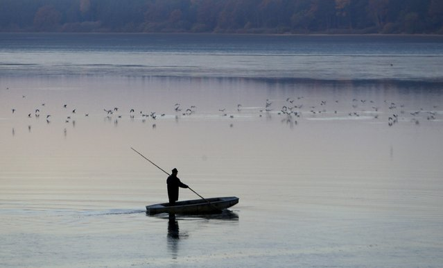A fisherman stands on a boat during the traditional carp haul in the village of Smrzov, near the south Bohemian town of Trebon, Czech Republic, November 2, 2015. (Photo by David W. Cerny/Reuters)