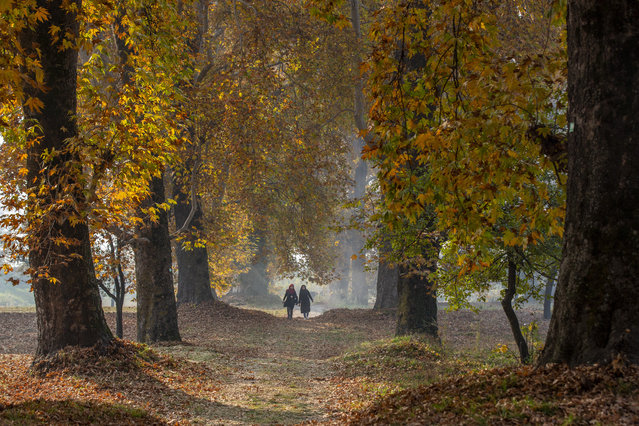 Kashmiri women walk in a garden covered with fallen Chinar leaves on the outskirts of Srinagar, Indian controlled Kashmir, Wednesday, November 4, 2020. Kashmiris collect fallen leaves in autumn to make charcoal for use during winters. (Photo by Dar Yasin/AP Photo)