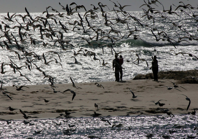 Startled gulls rise and turn into a stiff offshore wind at Malibu Lagoon in Malibu, Calif., Thursday, December 25, 2014. The winds, following a cold front that raced through the state overnight, swept skies clean and whipped up whitecaps along the coast Thursday. (Photo by John Antczak/AP Photo)