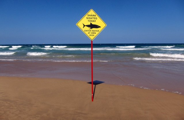A sign erected on Manly Beach indicates a shark sighting in Sydney, Australia, November 24, 2015. A spate of shark attacks and sightings in Australia is leaving some of the world's choice surfing and swimming beaches deserted ahead of summer Down Under. Christmas in the Southern Hemisphere typically draws millions of people to the warm Pacific waters of eastern Australia but for many the risk may not be worth it. (Photo by David Gray/Reuters)