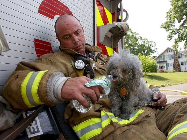 Manchester Firefighter John Fusco gives a drink of water to the dog he rescued from a structure fire in Manchester Conn., on Friday June 12, 2015. Fusco rescued the dog from a bedroom on the second floor. The dog was taken by an animal control officer to a veterinarian to be checked out. No one was home at the time of the fire and it was quickly extinguished, the cause is still being investigated. (Photo by Jared Ramsdell/Journal Inquirer via AP Photo)