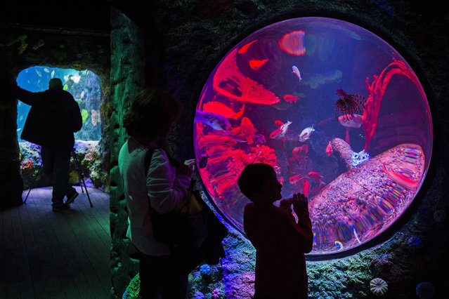 Kaden Martel, right, of Flint, Mich., points out fish at SEA LIFE Michigan Aquarium during a press preview tour, Thursday, January 22, 2015, at Great Lakes Crossing Outlets in Auburn Hills, Mich. (Photo by Jake May/AP Photo/The Flint Journal-MLive.com)