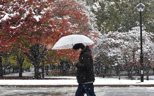 A pedestrian walks in snowfall in Tokyo on November 24, 2016. Tokyo woke up on November 24 to its first November snowfall in more than half a century, leaving commuters to grapple with train disruptions and slick streets. (Photo by Kazuhiro Nogi/AFP Photo)