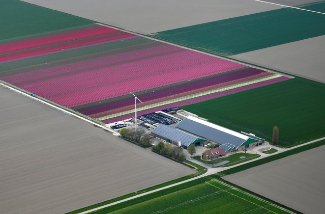 An aerial view of flower fields in Lisse, Netherlands on April 28, 2021. (Photo by Piroschka van de Wouw/Reuters)