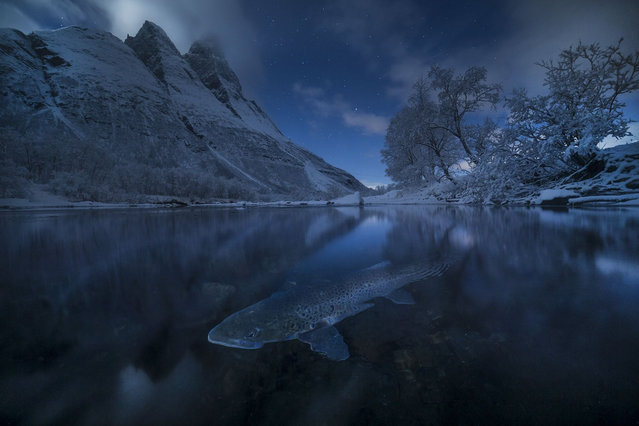 Polar Trout, Norway, by Audun Rikardsen. At Signaldalen, northern Norway, a brown trout is captured spawning under the stars on a moonlit night. Honourable mention, the Beauty of Nature category. (Photo by Audun Rikardsen/SIPA Contest)