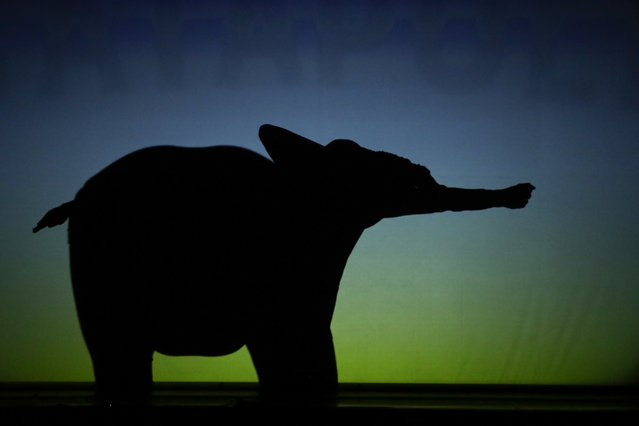 """In this photo taken on Tuesday, December 20, 2016, dancers of the U.S. company """"Catapult"""" create an elephant, during their show """"Magic Shadows"""", in Milan, Italy. (Photo by Luca Bruno/AP Photo)"""