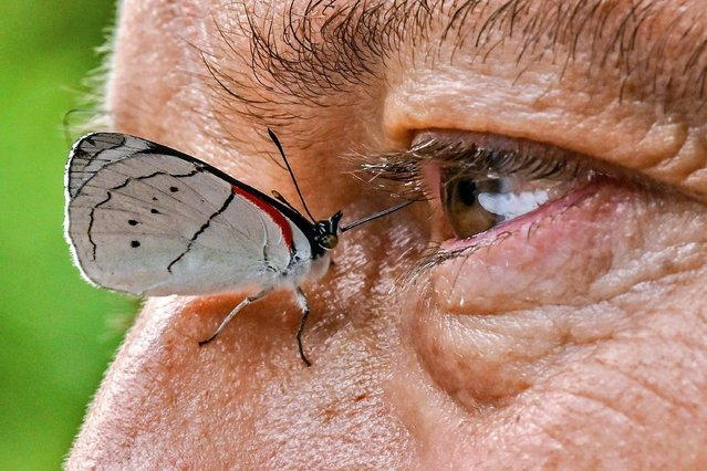 A butterfly is pictured next to the eye of Colombian photographer Juan Guillermo Jaramillo in Jardin, Antioquia department, Colombia on August 19, 2021. Colombian agronomist Juan Guillermo Jaramillo, 65, is the co-author of an inventary that certified Colombia as the country with the largest number of butterfly species in the world. (Photo by Joaquin Sarmiento/AFP Photo)