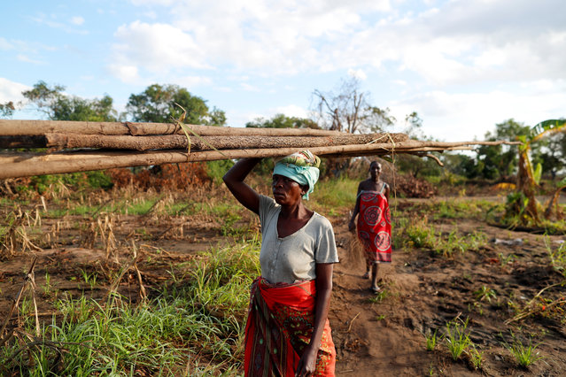 """Maria Jofresse, 25, walks behind her mother-in-law Teresa Miquitaio, 49, as she carries wood to build a makeshift shelter in the aftermath of Cyclone Idai, outside the village of Cheia, which means """"Flood"""" in Portuguese, near Beira, Mozambique April 2, 2019. Maria Jofresse lost her two children to the storm. In the midst of the floods, she dug their small graves but can't find them anymore. """"People suffered indeed but no one suffered as I did because I lost the most precious things I had – my kids"""", she said. (Photo by Zohra Bensemra/Reuters)"""