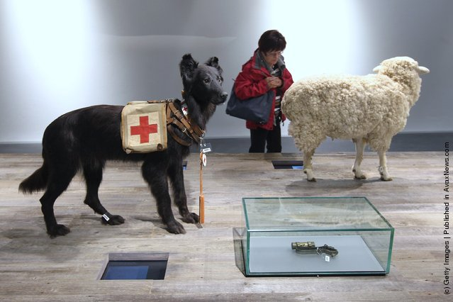 A visitor walks past a stuffed dog and sheep in an exhibit showing the rolls of animals in war