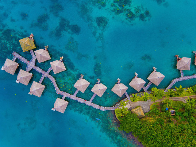 Rich in Polynesian fantasy, over water bungalows are steeped in  vibrantly tinted Tahitian seas. (Photo by Chase Guttman/Caters News)
