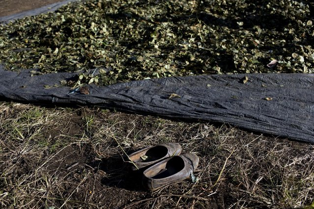 This June 20, 2015 photo shows a pair of shoes parked at the edge of a tarp, placed there by a woman whose job it is to spread the coca leaves with her feet as part of the drying process, in Samugari, Peru. According to United Nations figures, some 99,000 metric tons of coca leaves were picked in the area in 2013 compared to 22,000 tons in other parts of Peru. (Photo by Rodrigo Abd/AP Photo)