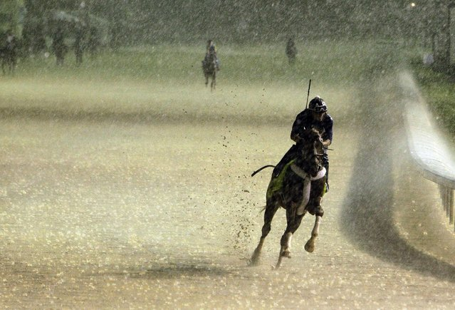 Exercise rider Abel Flores takes Kentucky Derby hopeful Tapiture for a morning workout in the rain at Churchill Downs Monday, April 28, 2014, in Louisville, Ky. (Photo by Garry Jones/AP Photo)