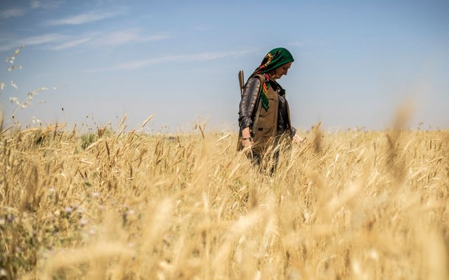 A Kurdish female volunteer, from the newly formed Community Protection Forces, guards a wheat field, against threats by jihadists to burn the crops, during harvest season on June 13, 2020, in the countryside east of Qamishli in Syria's northeastern Hasakah province. (Photo by Delil Souleiman/AFP Photo)