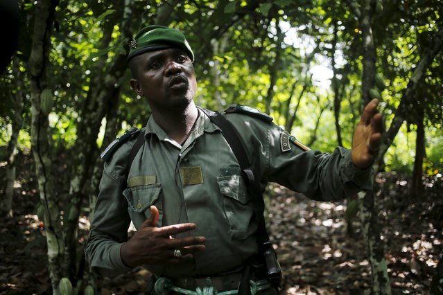 Kolo Ouattara, an OPIR agent responsible for Mont Peko, tallks during a patrol inside Mont Peko National Park in Duekoue department, western Ivory Coast August 18, 2015. The OIPR is one of the government agencies charged with managing protected land. (Photo by Luc Gnago/Reuters)
