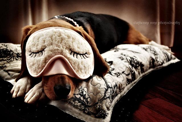 """Sleeping Millie"". (Photo by Catherine Rene)"