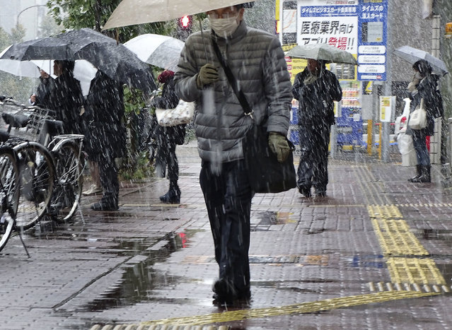 Men walk in the snow in Tokyo, Thursday, November 24, 2016. Tokyo residents have woken up to the first November snowfall in more than 50 years. An unusually cold air mass brought wet snow to Japan's capital on Thursday. Above-freezing temperatures kept the snow from sticking, but forecasters said there could be an accumulation of up to 2 centimeters (1 inch). The last time it snowed in central Tokyo in November was in 1962. (Photo by Eugene Hoshiko/AP Photo)
