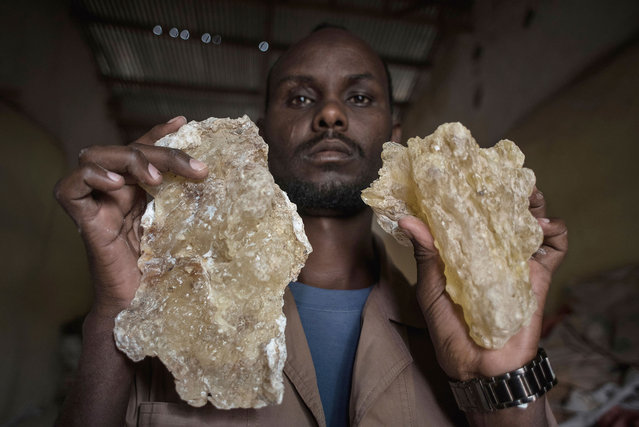 A man holds up two large tears of maydi, the large, most expensive chunks of frankincense resin, in Burao, Somaliland, a breakaway region of Somalia on August 6, 2016. (Photo by Jason Patinkin/AP Photo)