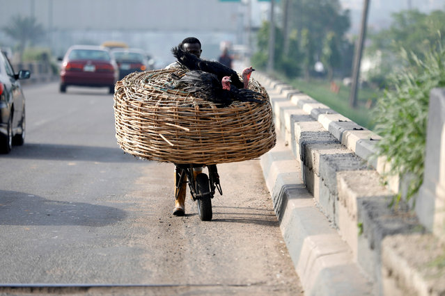 A labourer pushes a basket with livestock on a wheel barrow along a road in Ojota district in Lagos, Nigeria May 15, 2018. (Photo by Akintunde Akinleye/Reuters)