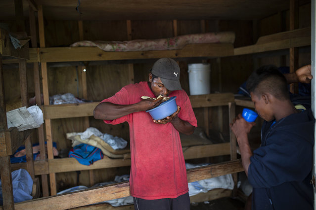 In this September 9, 2018 photo, Miskito divers eat a breakfast of rice, beans and bananas before the start of their work day, in Cay Savannah, Honduras. When not in Caribbean waters the divers are lodged in a small wooden house provided by the boat owners. (Photo by Rodrigo Abd/AP Photo)