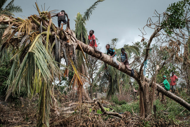 Children climb on a coconut tree damaged by the winds of cyclone Idai in Beira, Mozambique, on March 27, 2019. Five cases of cholera have been confirmed in Mozambique following the cyclone that ravaged the country killing at least 468 people, a government health official said on March 27, 2019. Cyclone Idai smashed into Mozambique on March 15, unleashing hurricane-force winds and heavy rains that flooded much of the centre of the poor southern African country and then battered eastern Zimbabwe and Malawi. (Photo by Yasuyoshi Chiba/AFP Photo)