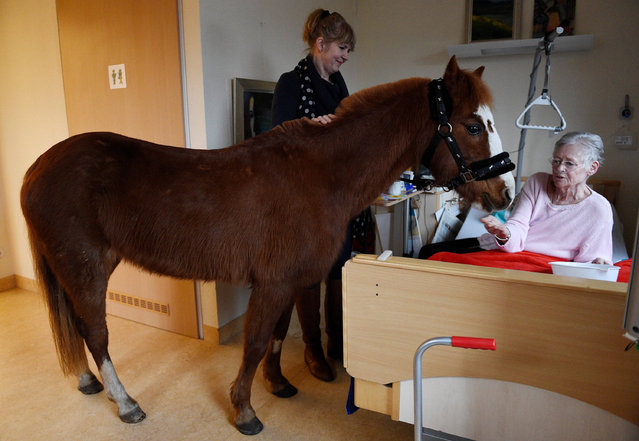 A pony stands with owner Hinrika Höges (L)  on February 3, 2017 in the room of a patient of the Diakonie-Hospiz Wannsee in Berlin, Germany. On Fridays the pony comes to a special visit to the hospice. (Photo by Rainer Jensen/DPA)