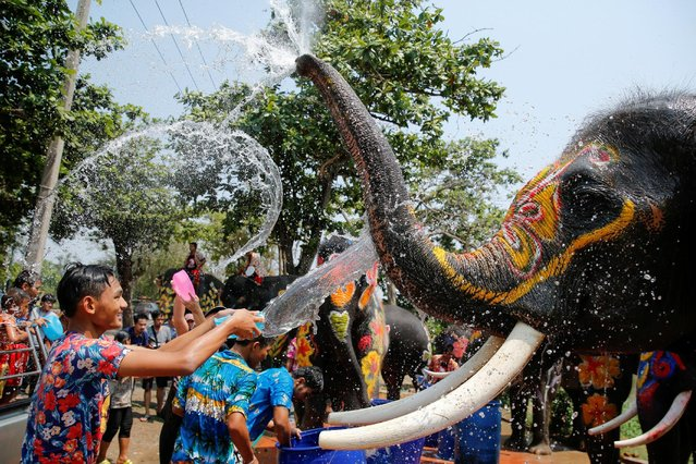 A boy and an elephant splash each other with water during the celebration of the Songkran water festival in Thailand's Ayutthaya province, north of Bangkok, April 11, 2016. (Photo by Jorge Silva/Reuters)