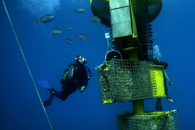 """A diver of Ecocean checks """"Biohuts"""" installed in May 2019 to study the migratory flows of fishes as part of the project """"CONNEXSTERE"""", on September 18, 2019 off Leucate, southern France. Ecocean is a French company which specializes in developing and implementing new technologies for the sustainable use and management of the marine environment. (Photo by Boris Horvat/AFP Photo)"""