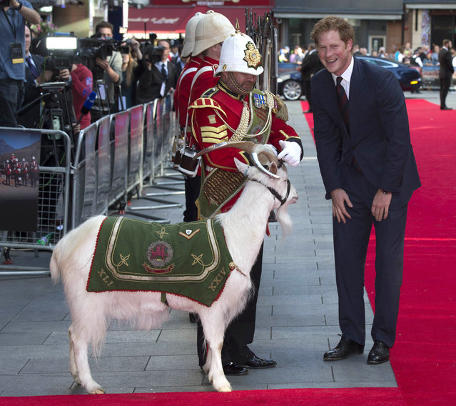Britain's Prince Harry (R) greets the goat Shenkin, Reigmental Mascot of the 3rd Battalion The Royal Welsh and his handler Sgt Jacko Jackson (C) as he arrives to attend the 50th anniversary premiere screening of the film Zulu in London on June 10, 2014. Zulu dramatises the events at Rorke's Drift between the British Army and the Zulu Battalions in January 1879. (Photo by Paul Edwards/AFP Photo)