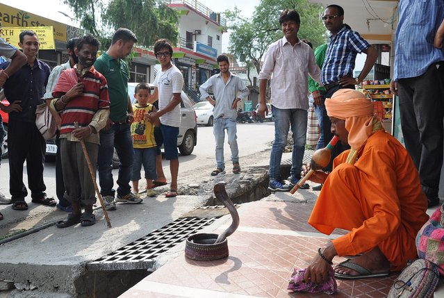 An Indian snake charmer entertains passers-by in Dharamshala, India, on Jule 8, 2014. (Photo by Sanjay Baid/European Pressphoto Agency)