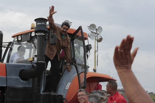 Venezuela's President Nicolas Maduro (C) waves to supporters from a tractor during his visit to a corn plantation in the state of Cojedes, in this handout picture provided by Miraflores Palace on August 12, 2015. (Photo by Miraflores Palace/Reuters)