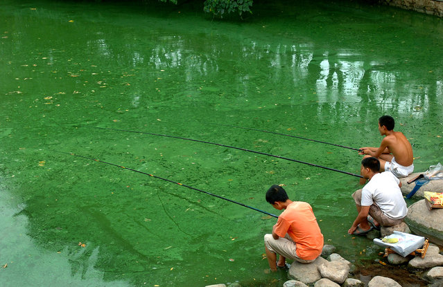 Children fish in a polluted river covered with algae in Hefei, east China's Anhui province, July 18, 2006. China plans to invest 1.4 trillion yuan ($175 billion) in environmental protection in the next five years, state media said on Tuesday, to curb water and air pollution so severe it causes riots and health problems. (Photo by Jianan Yu/Reuters)