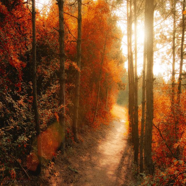 Path to the shine. (Ildiko Neer)