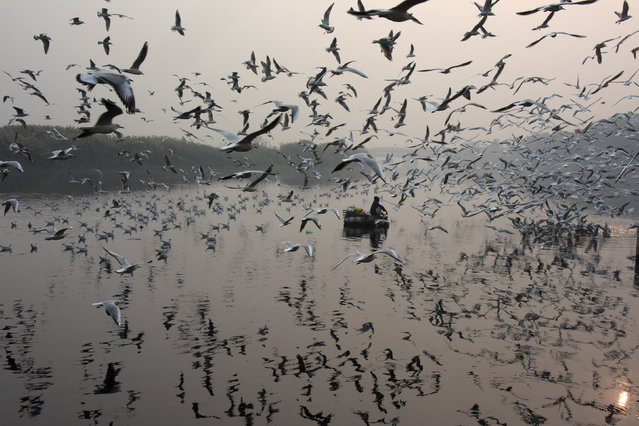 An Indian man feeds seagulls on the Yamuna River in New Delhi on November 15, 2017. (Photo by Dominique Faget/AFP Photo)