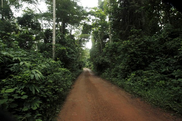 A view of an entrance to the protected Gouin-Debe forest in Blolequin department, western Ivory Coast August 17, 2015. (Photo by Luc Gnago/Reuters)