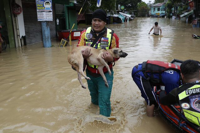 A rescuer carries a dog as floods continue to rise in Marikina, Philippines due to Typhoon Vamco on Thursday, November 12, 2020. (Photo by Aaron Favila/AP Photo)